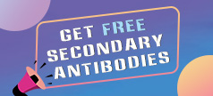 Antibodies Promotion